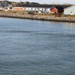 Hvide Sande und Seehunde