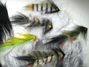 ein Schwarm Barsche mit Weißfischen